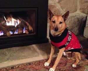 dog sitting by the fire