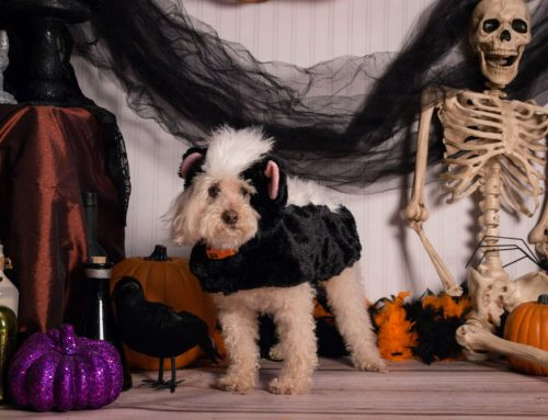 Are Halloween treats safe for my pet?