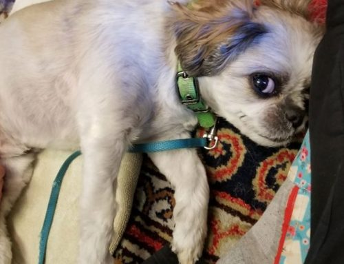 5 Tips to Help Entertain Your Pet After Surgery